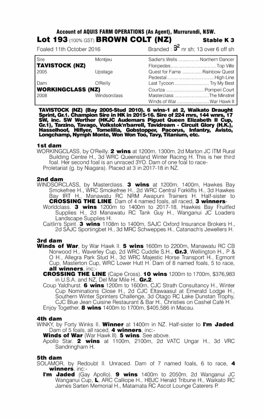 Tavistock (NZ) / Workingclass (NZ) - pedigree