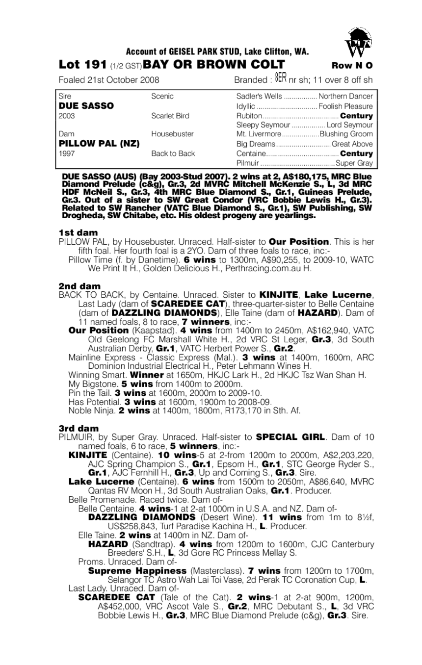Due Sasso (AUS) / Pillow Pal (NZ) - pedigree