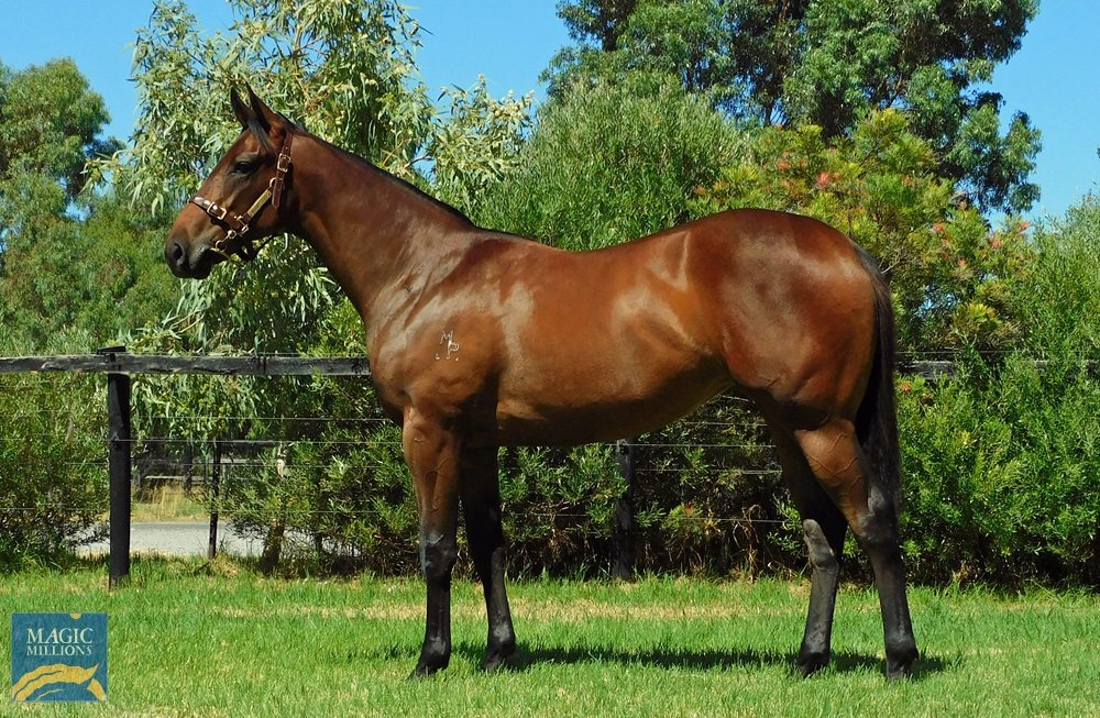 Rommel (AUS) / Angel's Force (AUS) 2019 Filly - Image 1