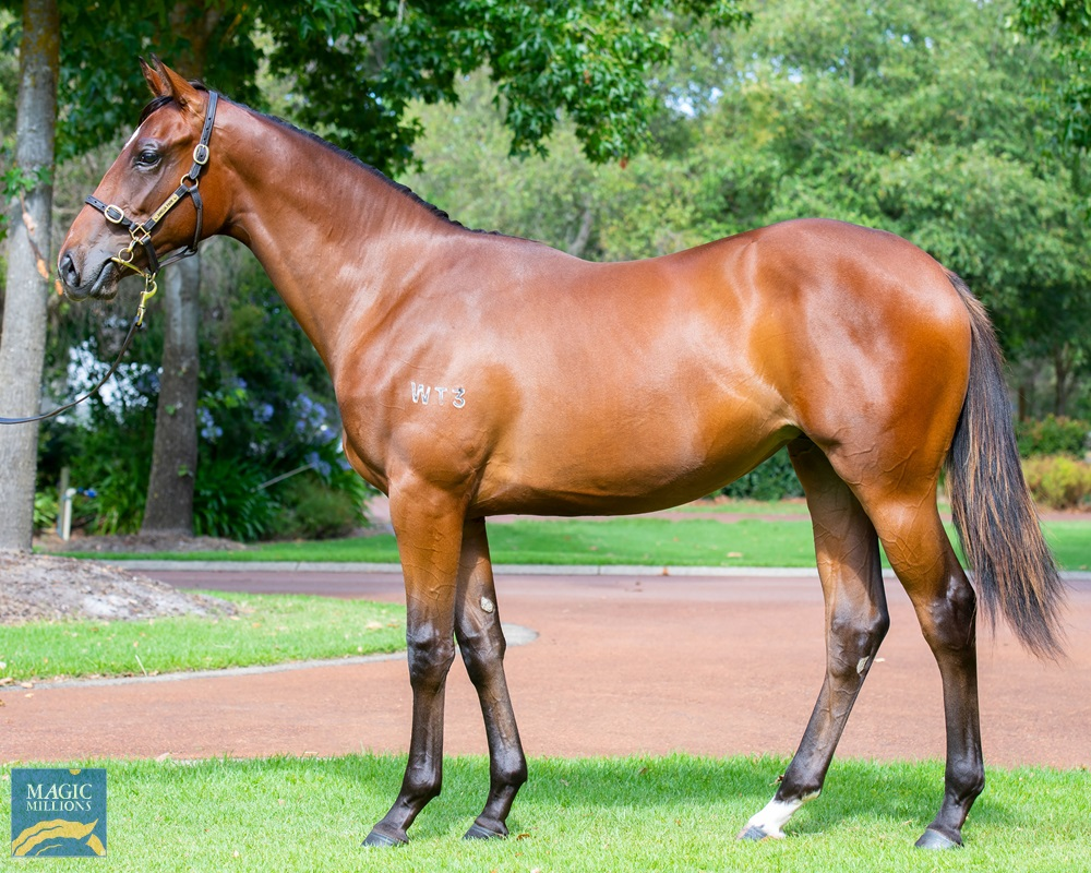 Magnus (AUS) / Hussy Five Oh (AUS) 2019 Filly - Image 1