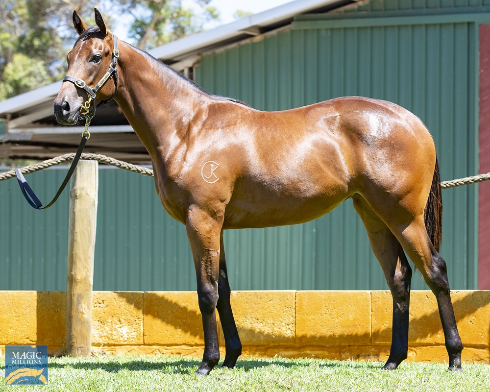 Universal Ruler (AUS) / Kelly's Angel (AUS) 2019 Filly - Image 1