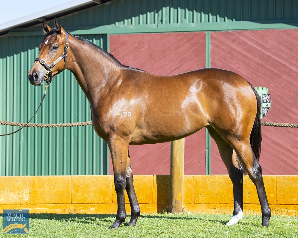 Snippetson (AUS) / Pearlesque (AUS) 2019 Filly - Image 1