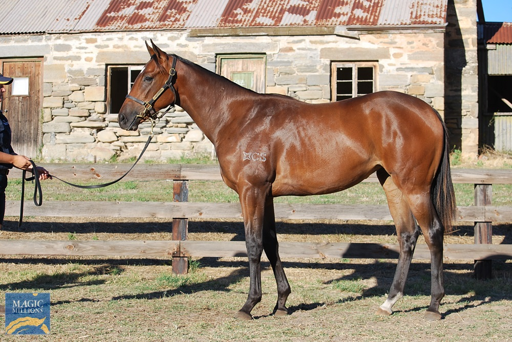 Impending (AUS) / Enthrall (AUS) 2019 Filly - Image 1