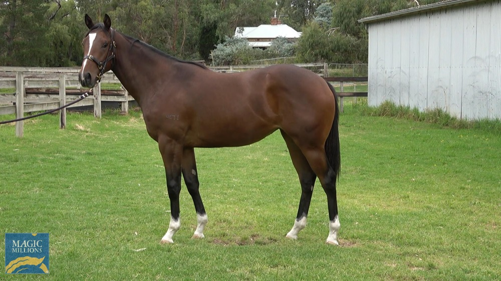 Palentino (AUS) / Wings of Alice (AUS) 2019 Filly - Image 1