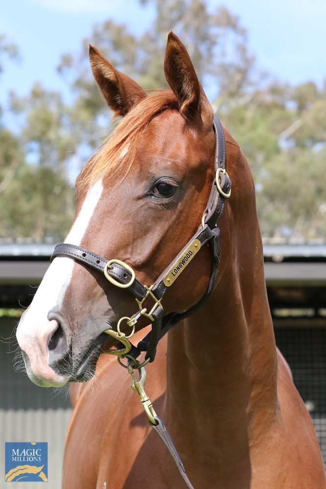 Star Witness (AUS) / She's Pretentious (AUS) 2019 Filly - Image 1