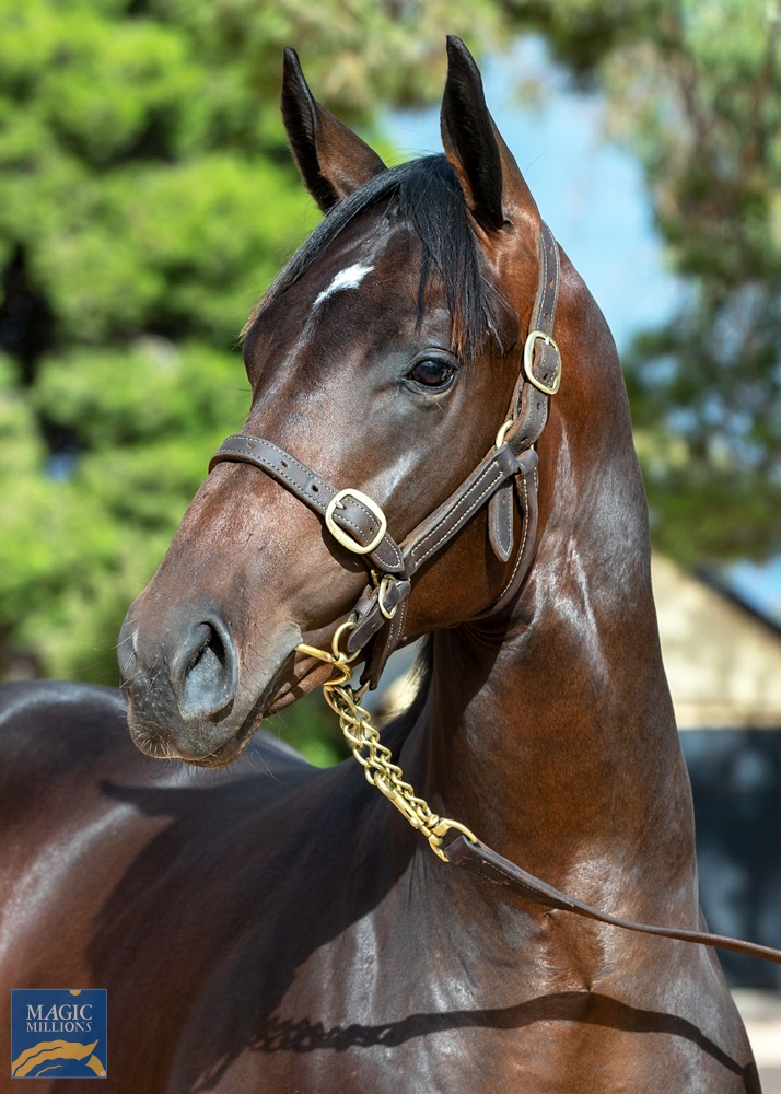 Your Song (AUS) / Hairpin (AUS) 2019 Colt - Image 2
