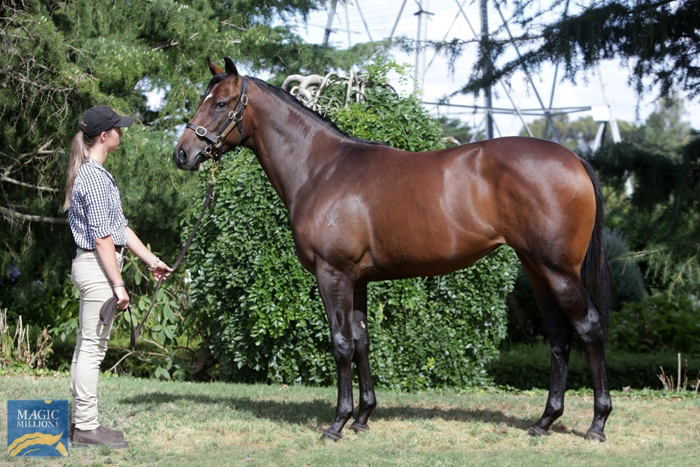 Belardo (IRE) / Super Trouper (NZ) 2019 Filly - Image 1