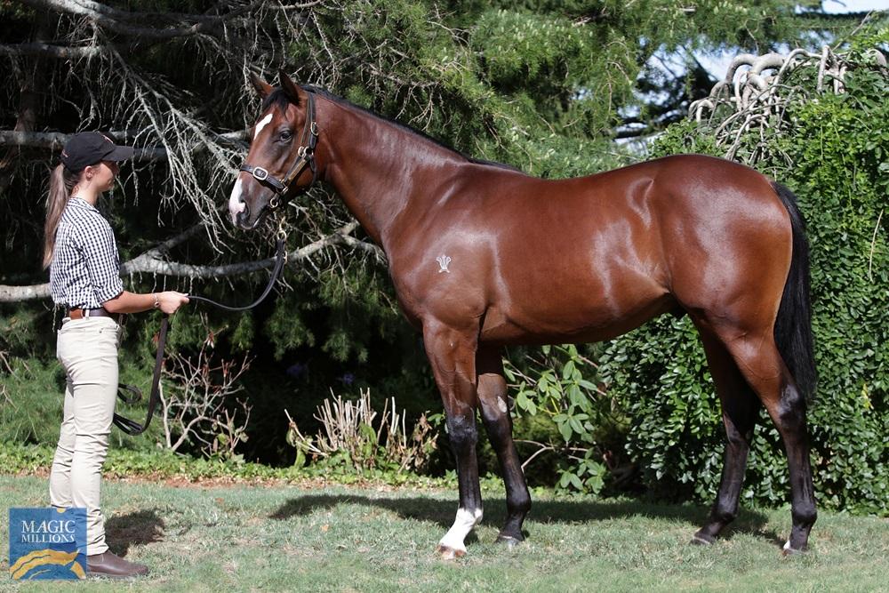 Zacinto (GB) / Empress Elect (NZ) 2019 Colt - Image 1