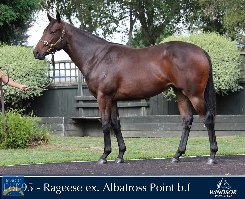 Rageese (AUS) / Albatross Point (NZ) 2019 Filly - Image 2