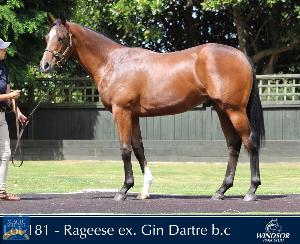 Rageese (AUS) / Gin Dartre (NZ) 2019 Colt - Image 1