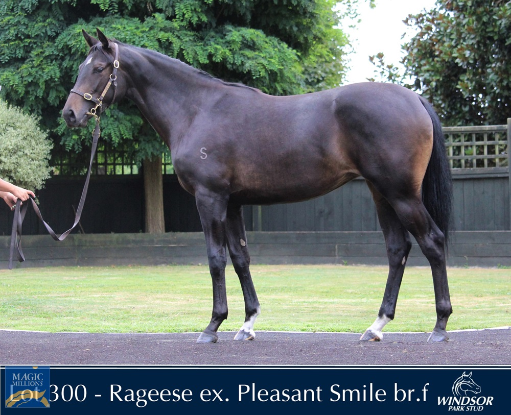 Rageese (AUS) / Pleasant Smile (AUS) 2019 Filly - Image 1