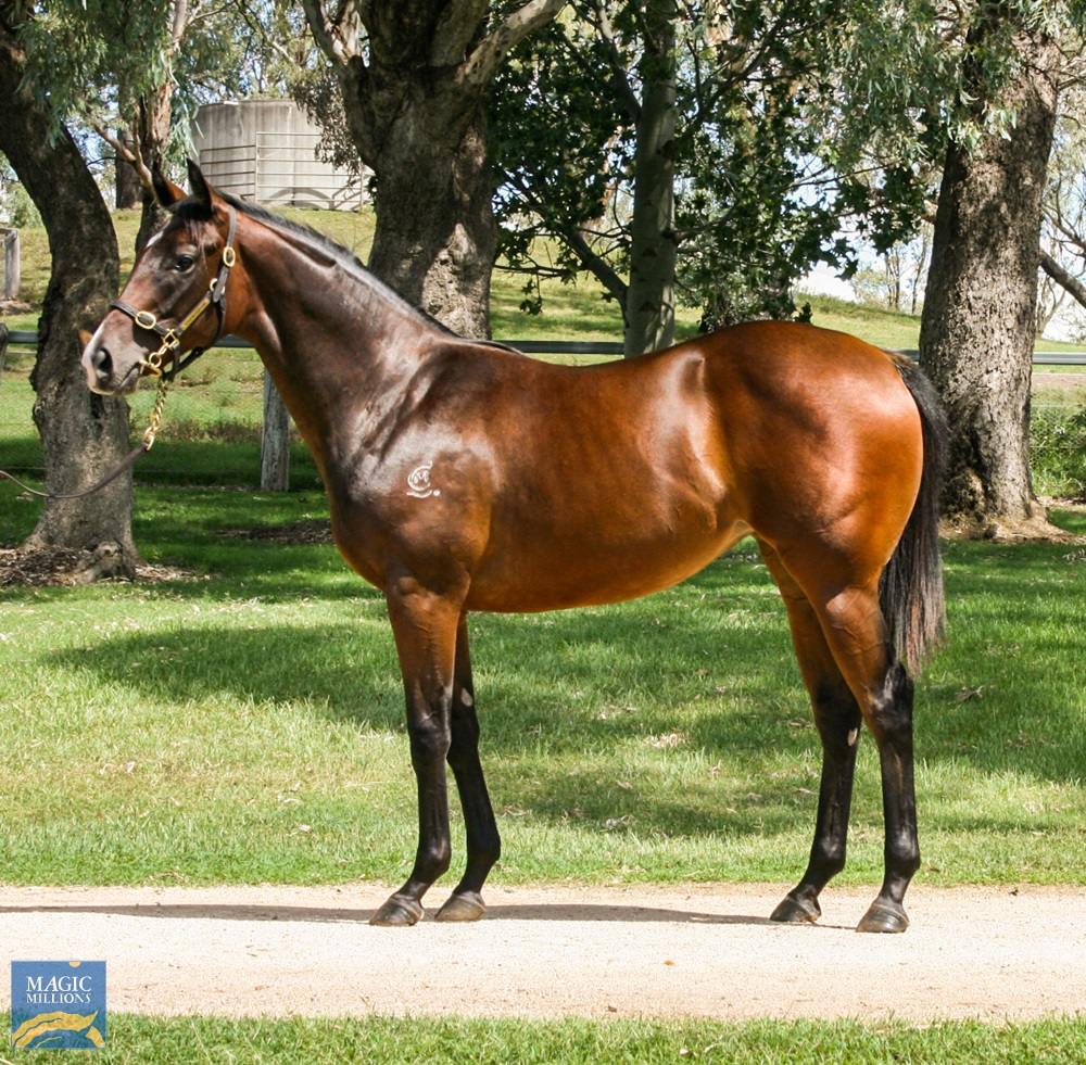 Worthy Cause (AUS) / Monaleah (AUS) 2019 Filly - Image 1
