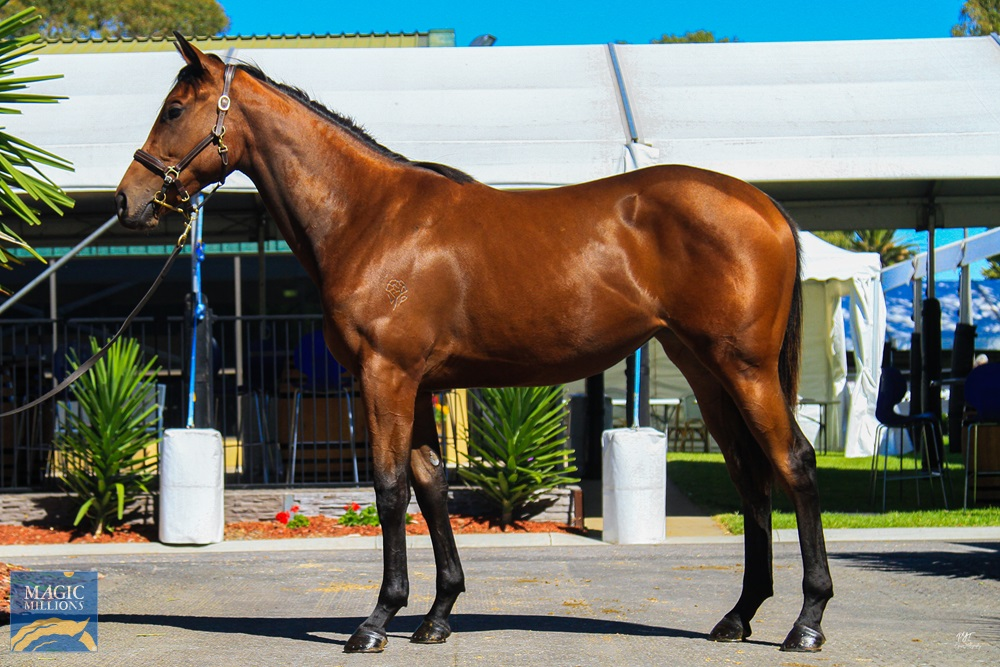 Akeed Mofeed (GB) / Tempting Faith (AUS) 2019 Filly - Image 1