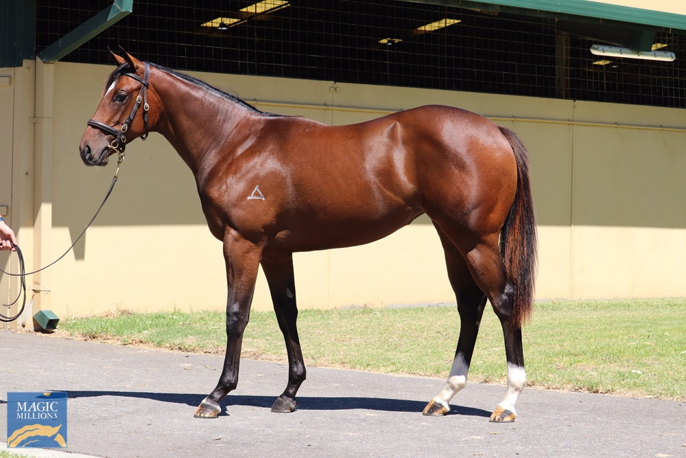 All Too Hard (AUS) / Off and Laughing (AUS) 2019 Filly - Image 1