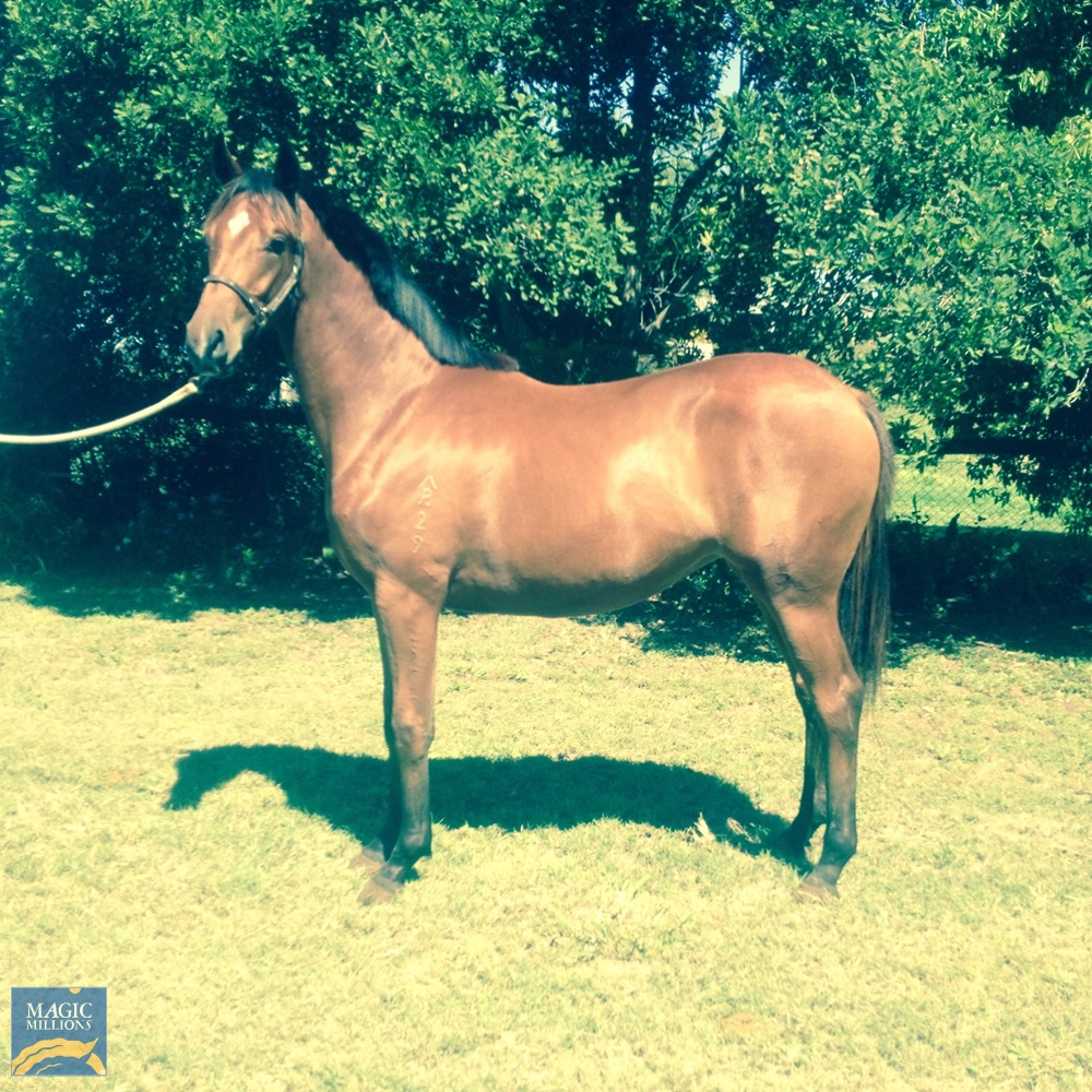 Altius (AUS) / Crystal Moss (AUS) 2019 Filly - Image 1