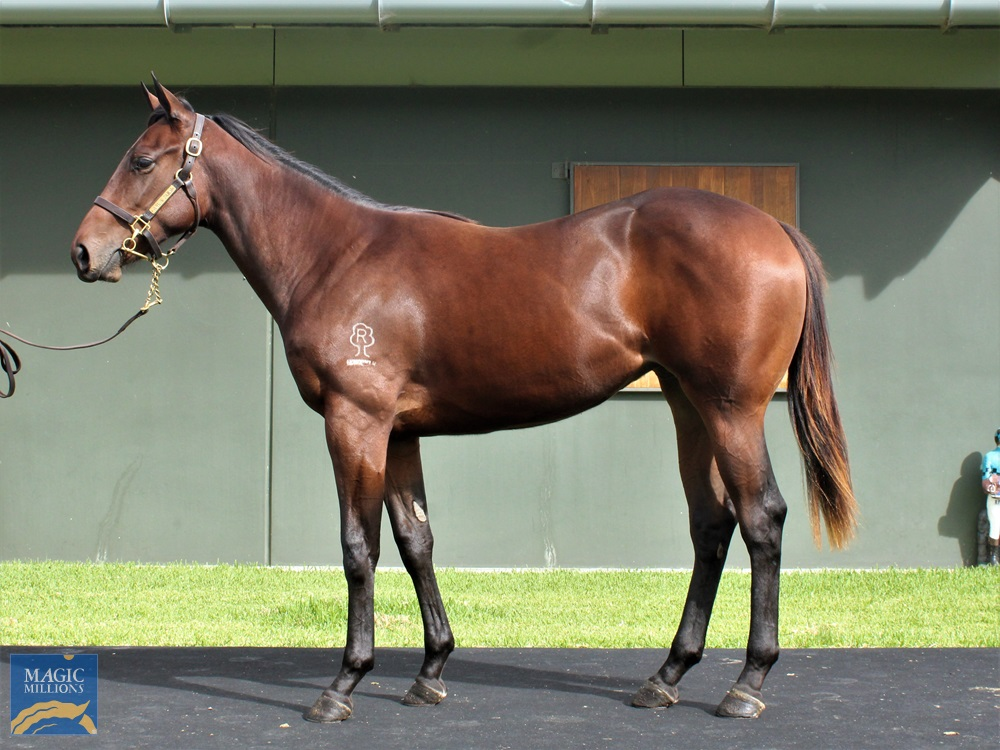 Spill the Beans (AUS) / Name and Shame (AUS) 2019 Filly - Image 1