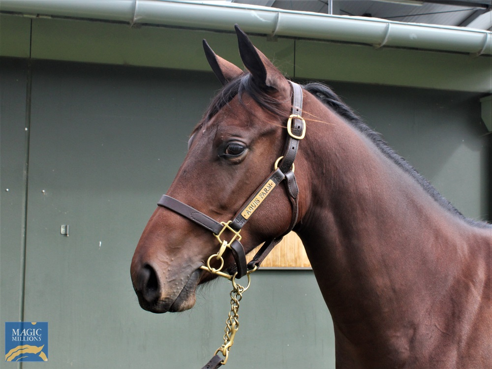 Spill the Beans (AUS) / Name and Shame (AUS) 2019 Filly - Image 2