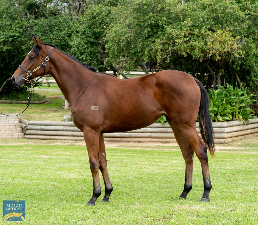 Hallowed Crown (AUS) / Antiquity (AUS) 2019 Filly - Image 1