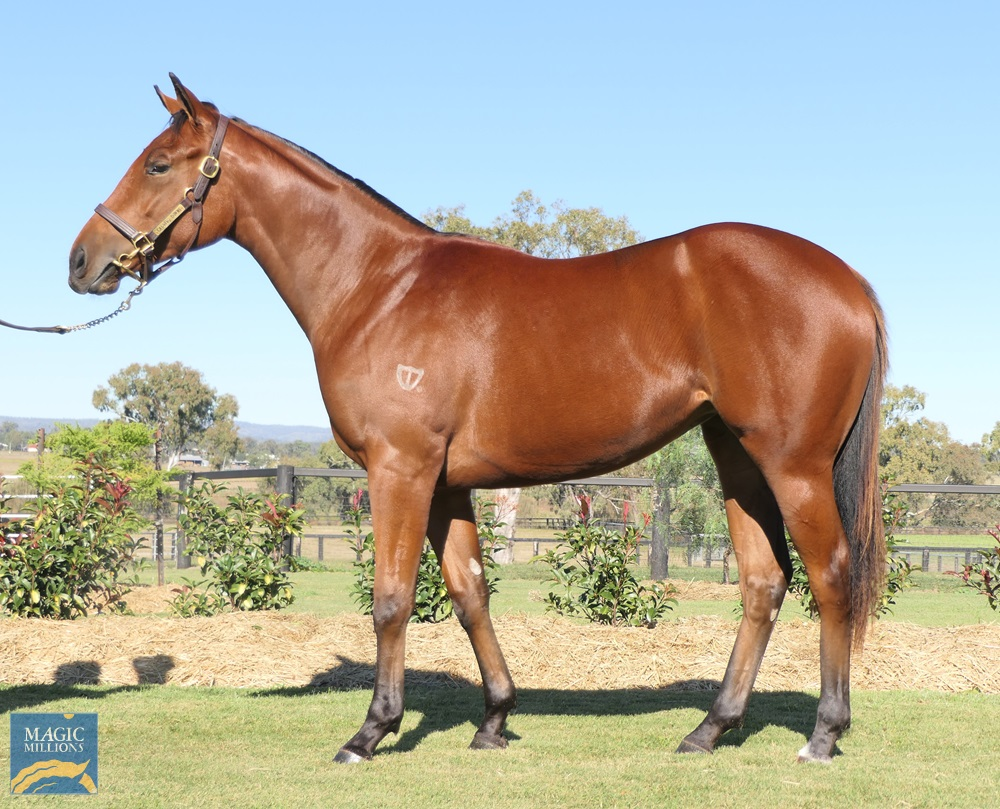 Star Turn (AUS) / Tennessee Fling (AUS) 2019 Filly - Image 1