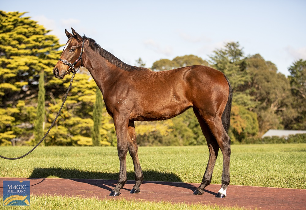 Flying Artie (AUS) / Hashmal (AUS) 2020 Filly - Image 1