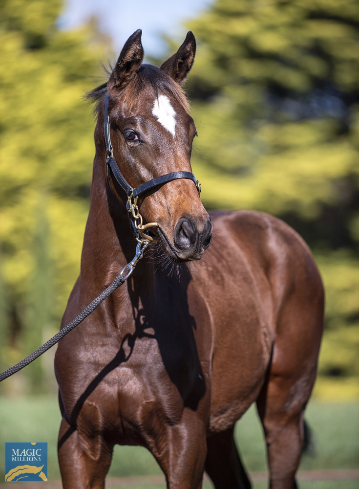 Flying Artie (AUS) / Hashmal (AUS) 2020 Filly - Image 2