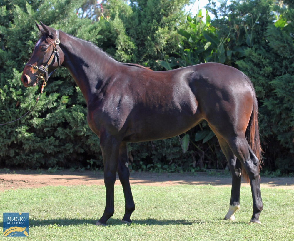 Better Than Ready (AUS) / Majeed (AUS) 2019 Filly - Image 1