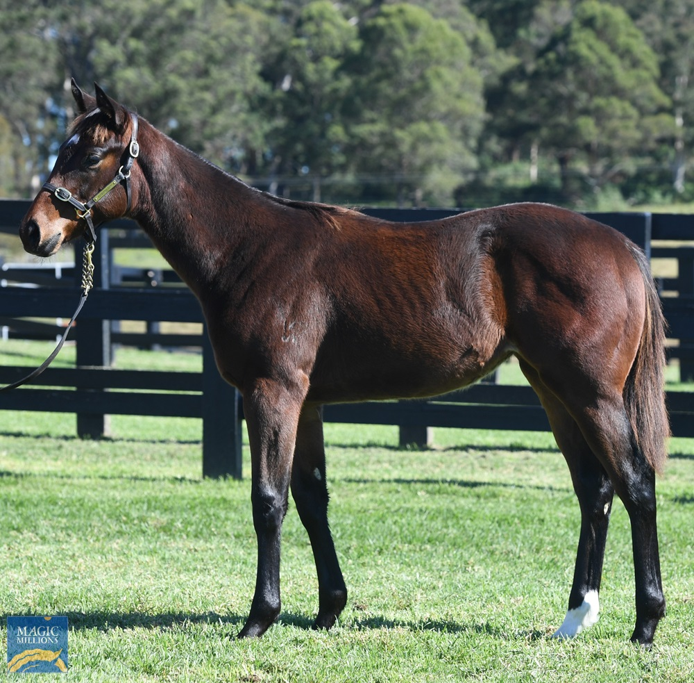 Better Than Ready (AUS) / Miss Independent (AUS) 2020 Filly - Image 1