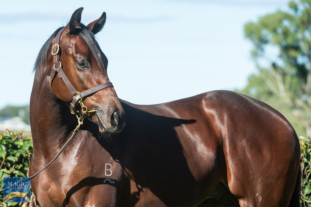Dundeel (NZ) / Quizzed (GB) 2019 Colt - Image 2