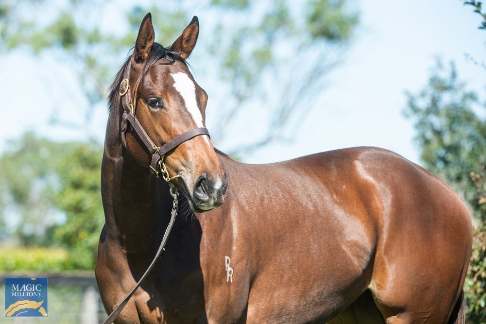 Flying Artie (AUS) / O'Reilly Cyrus (NZ) 2019 Filly - Image 2