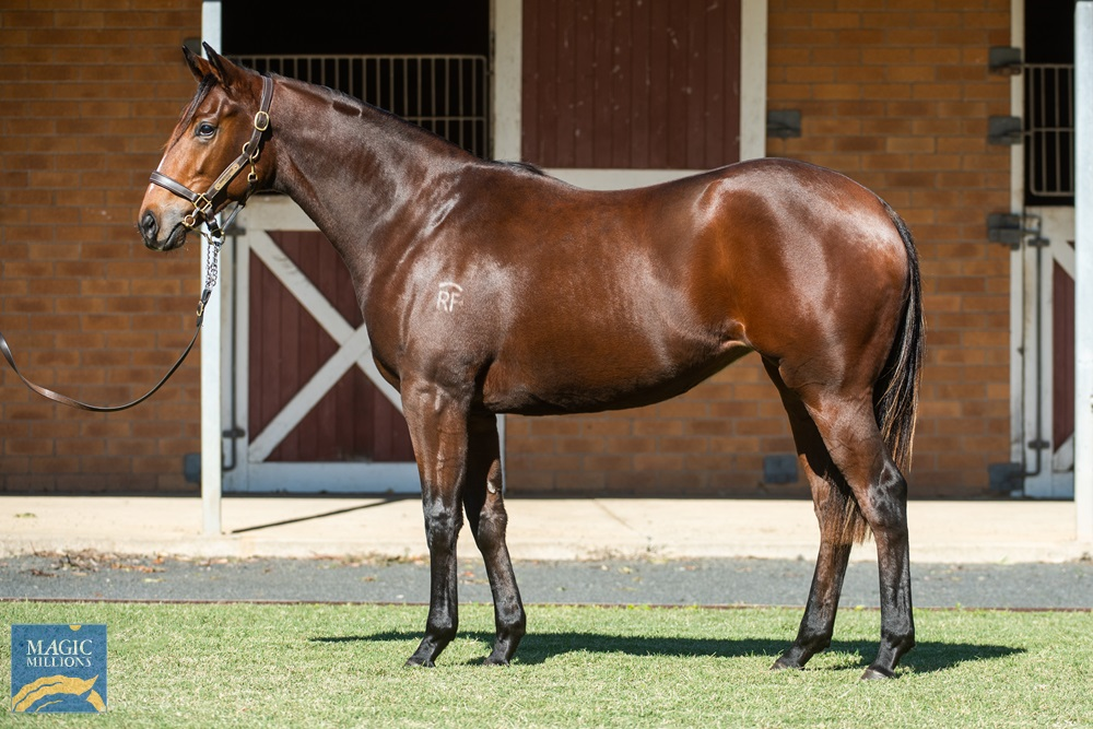 Sizzling (AUS) / Lizards Lover (AUS) 2019 Filly - Image 1