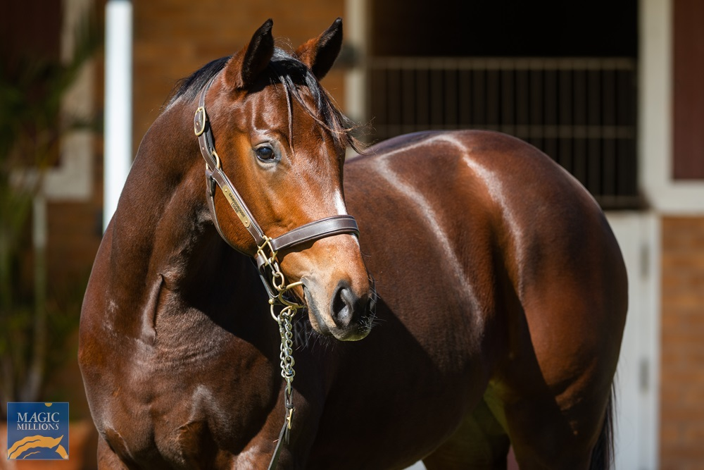 Sizzling (AUS) / Lizards Lover (AUS) 2019 Filly - Image 2