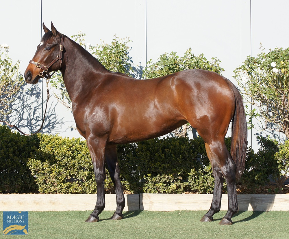 So You Think (NZ) / Pink Rocks (AUS) 2019 Filly - Image 1