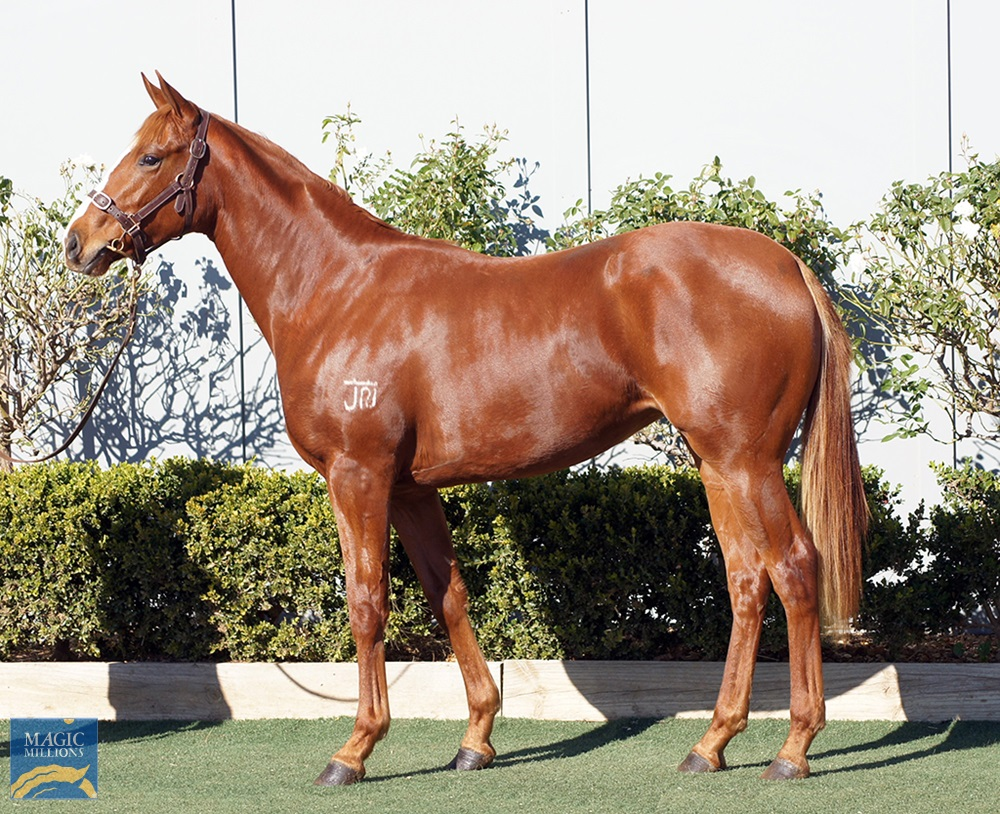 Extreme Choice (AUS) / She Brings Hope (AUS) 2019 Filly - Image 1