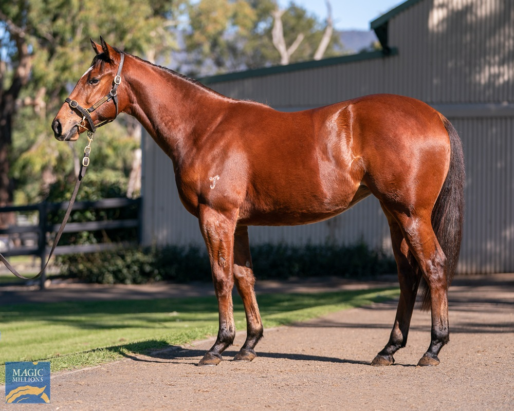 I Am Invincible (AUS) / So Hard to Catch (AUS) 2019 Filly - Image 1