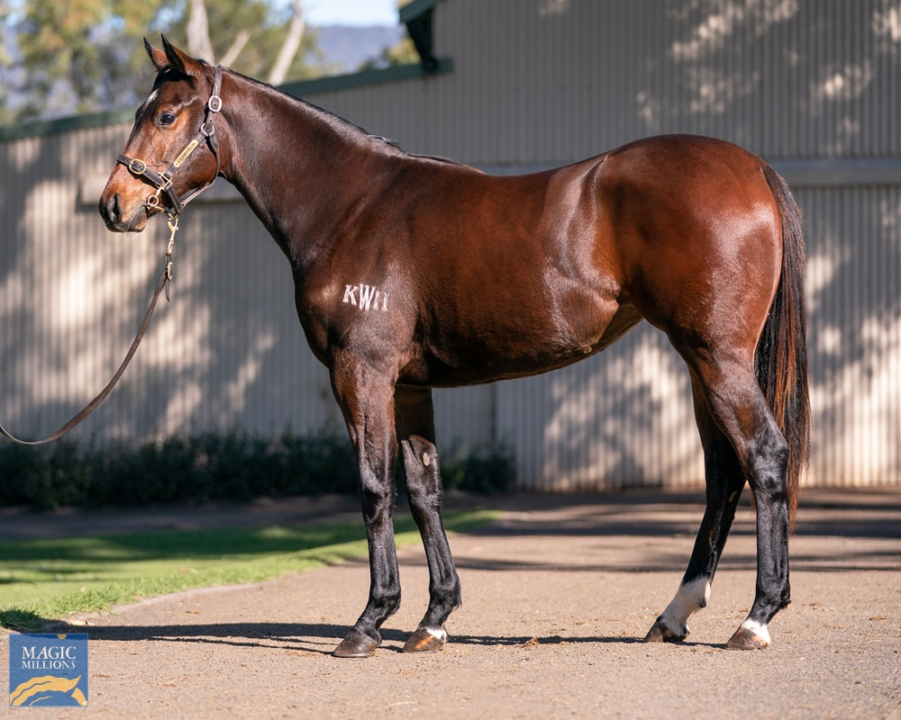 Russian Revolution (AUS) / The Wasp (AUS) 2019 Filly - Image 1