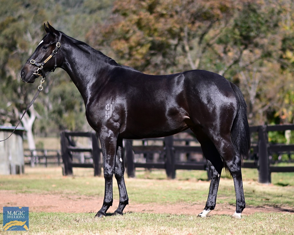 Vancouver (AUS) / Betrayed (AUS) 2019 Filly - Image 1