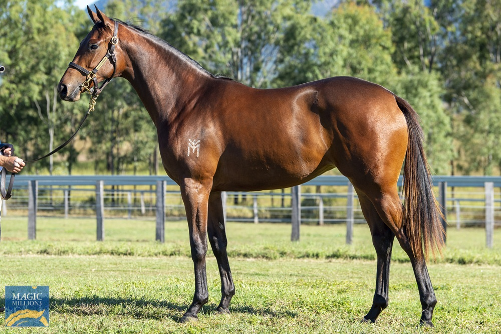 Highland Reel (IRE) / Figmentation (AUS) 2019 Filly - Image 1