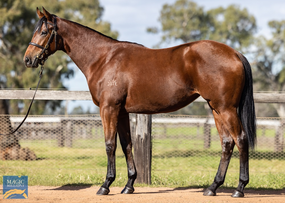 Flying Artie (AUS) / Cathay Lady (AUS) 2019 Filly - Image 1