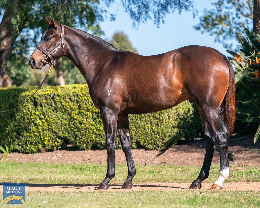 More Than Ready (USA) / Absolvent (AUS) 2019 Colt - Image 1