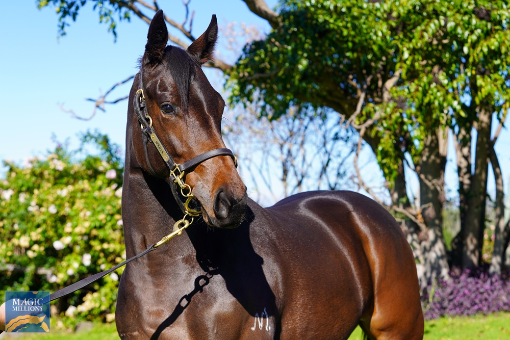 So You Think (NZ) / Voodoo Lady (NZ) 2019 Filly - Image 2