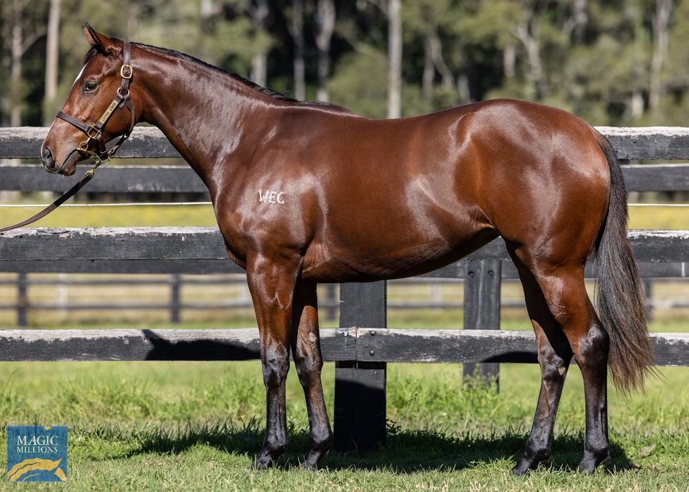 Foxwedge (AUS) / Calle Flora (USA) 2019 Filly - Image 1
