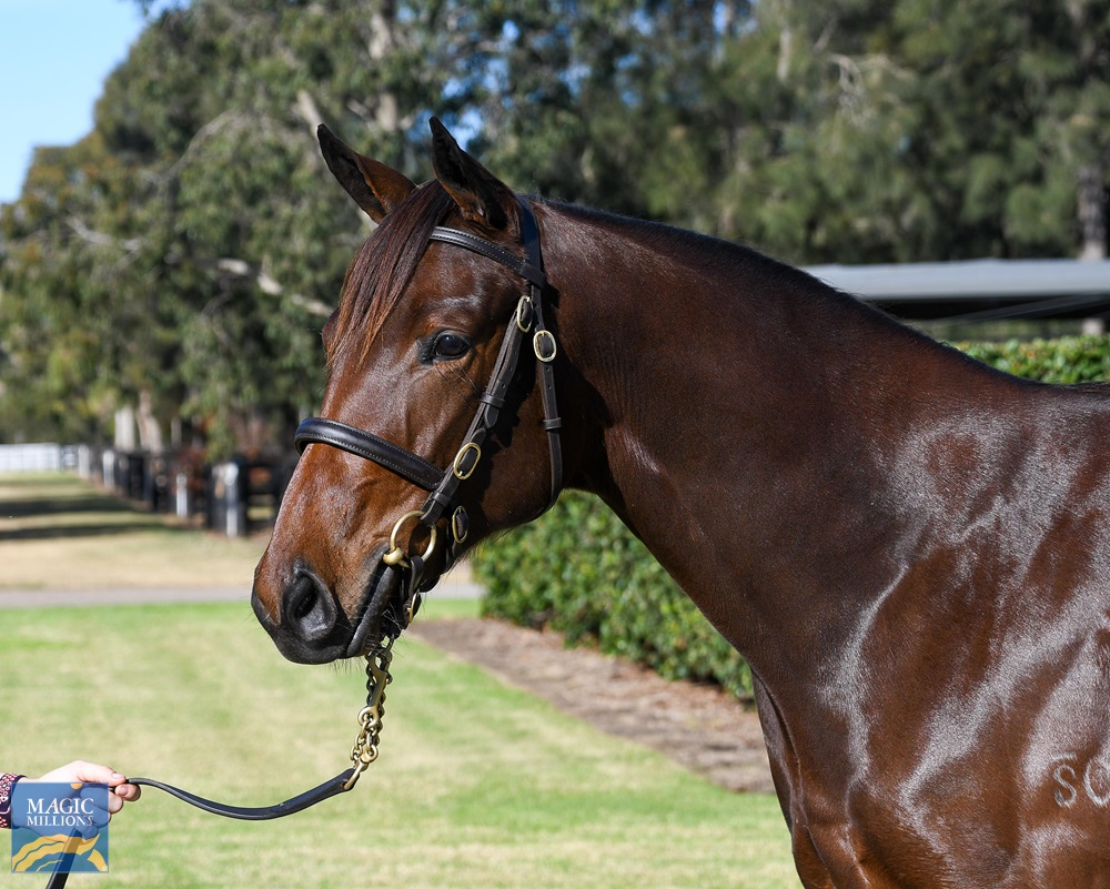 Caravaggio (USA) / She Can Skate (AUS) 2019 Filly - Image 2