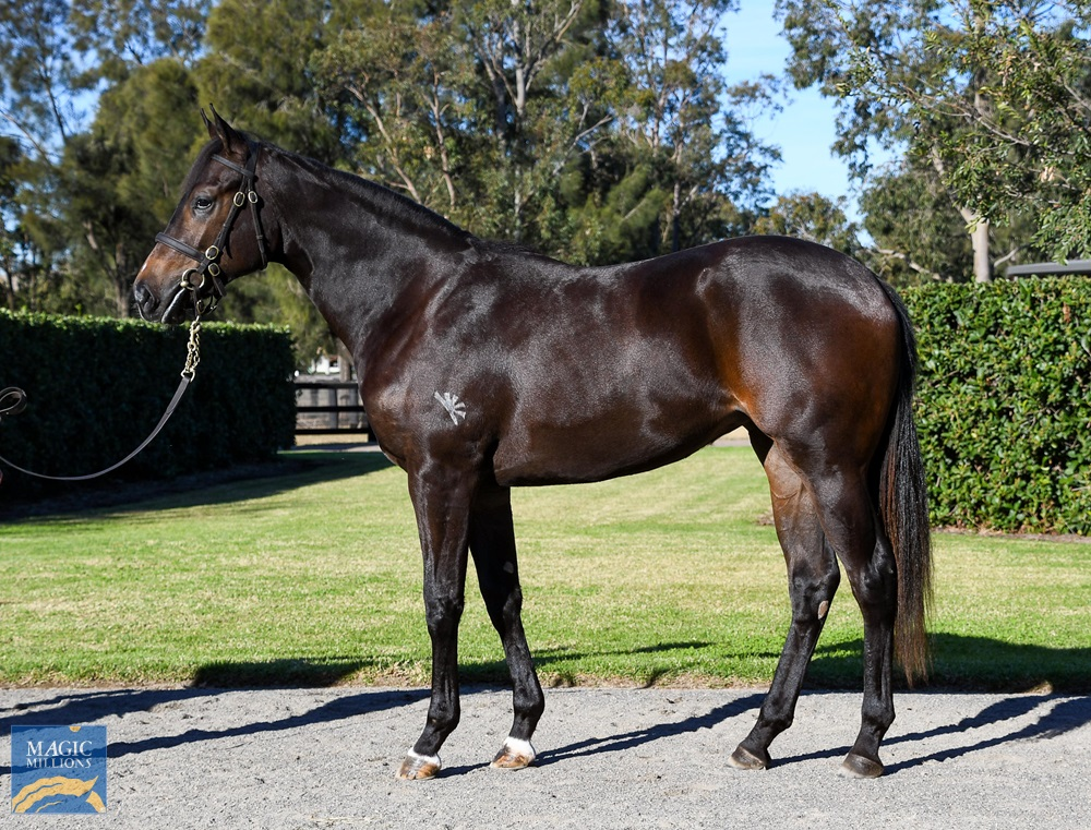 No Nay Never (USA) / Crystal Fountain (NZ) 2019 Filly - Image 1