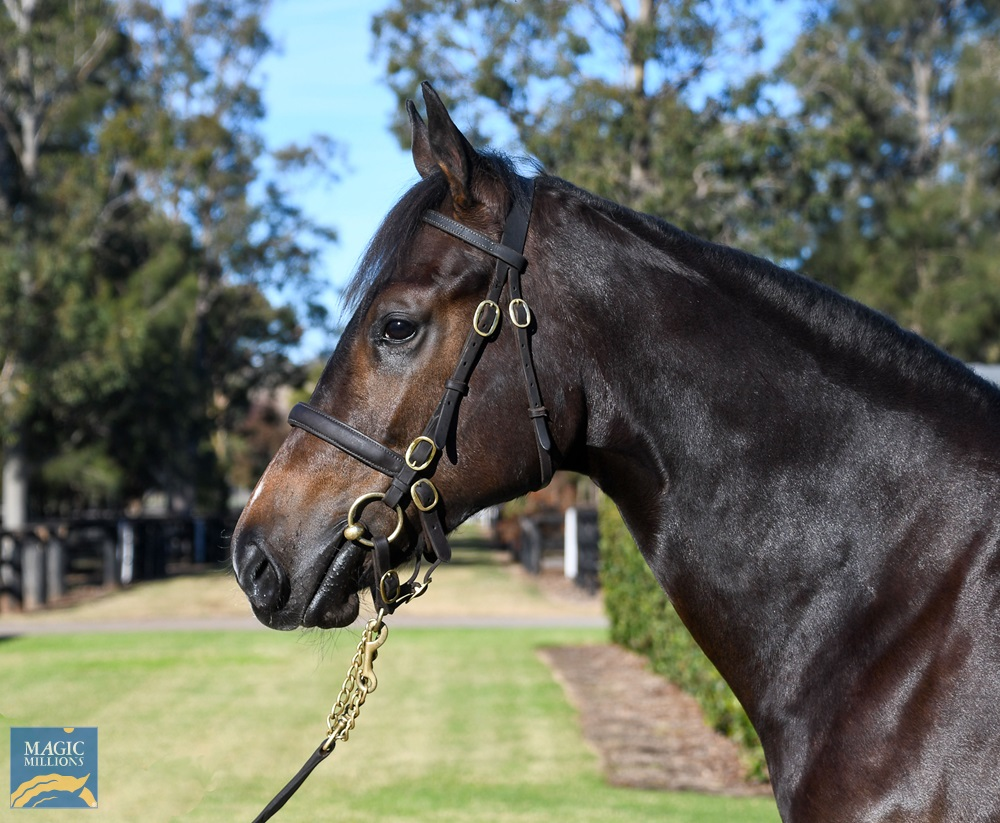 No Nay Never (USA) / Crystal Fountain (NZ) 2019 Filly - Image 2