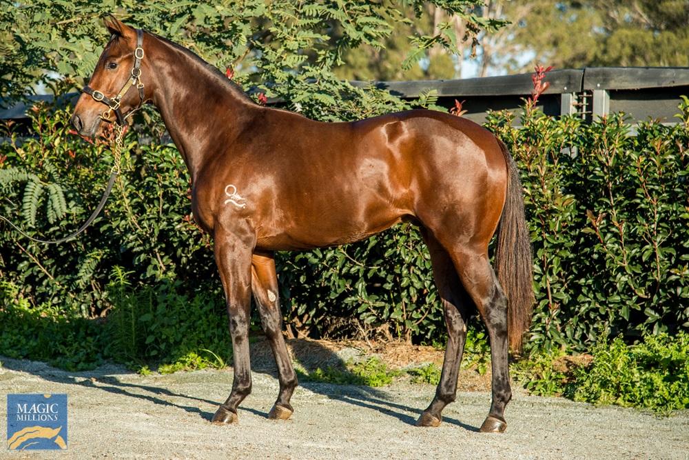 Spieth (NZ) / Ahbelle (AUS) 2019 Colt - Image 1