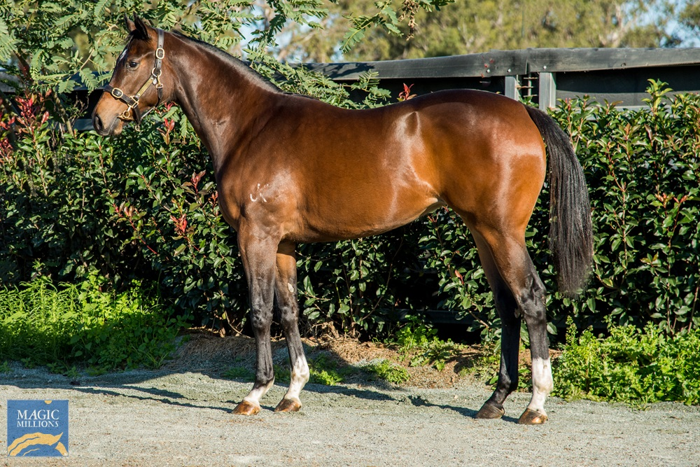 Exceed and Excel (AUS) / High Ideal (AUS) 2019 Filly - Image 1