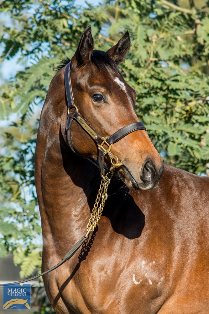 Exceed and Excel (AUS) / High Ideal (AUS) 2019 Filly - Image 2