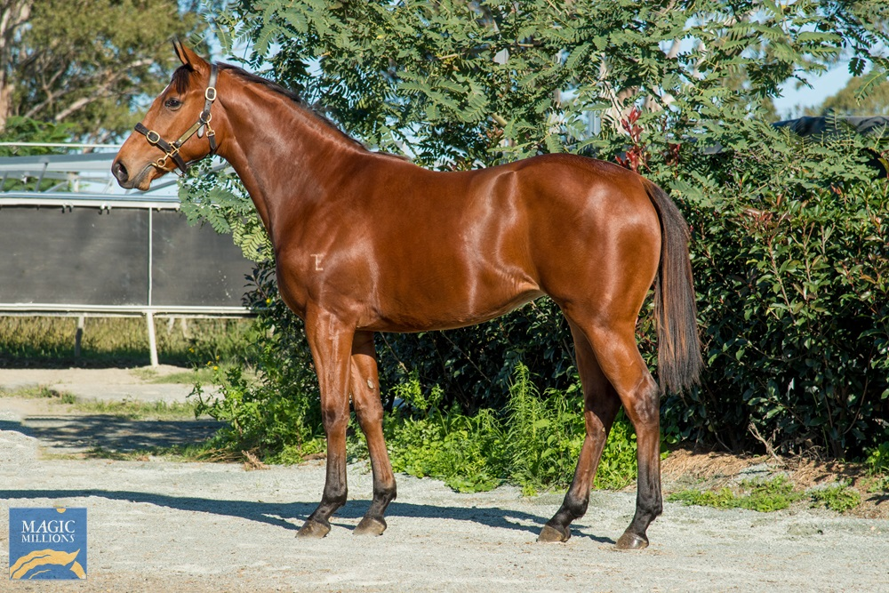 Merchant Navy (AUS) / Just Our Girl (AUS) 2019 Filly - Image 1
