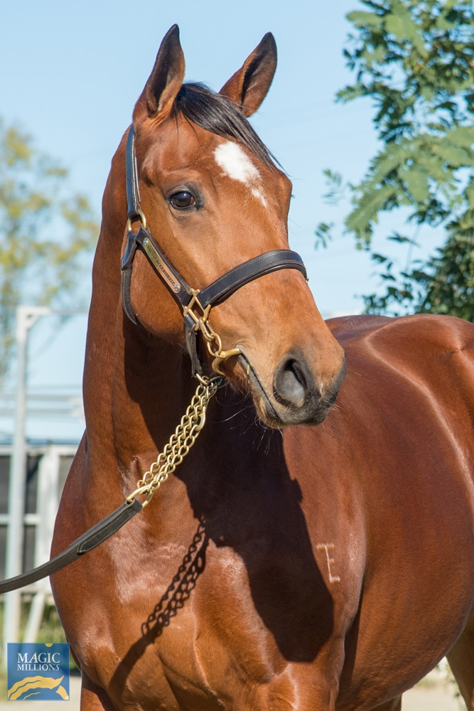 Merchant Navy (AUS) / Just Our Girl (AUS) 2019 Filly - Image 2
