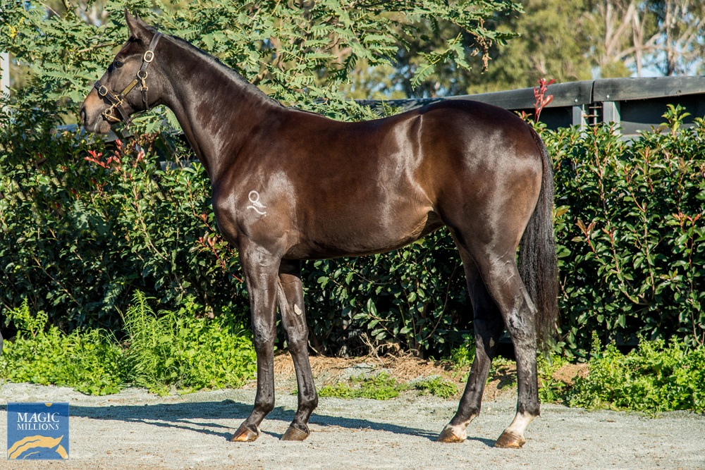 The Mission (AUS) / Cleanse (AUS) 2019 Filly - Image 1